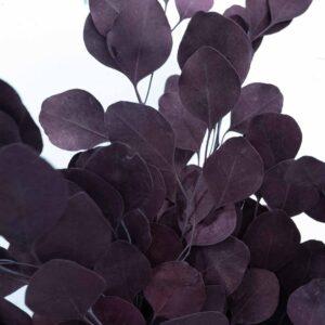 Trockenblume Eukalyptus Populus violett