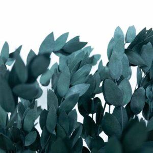 Trockenblume Eukalyptus Parvi gruen
