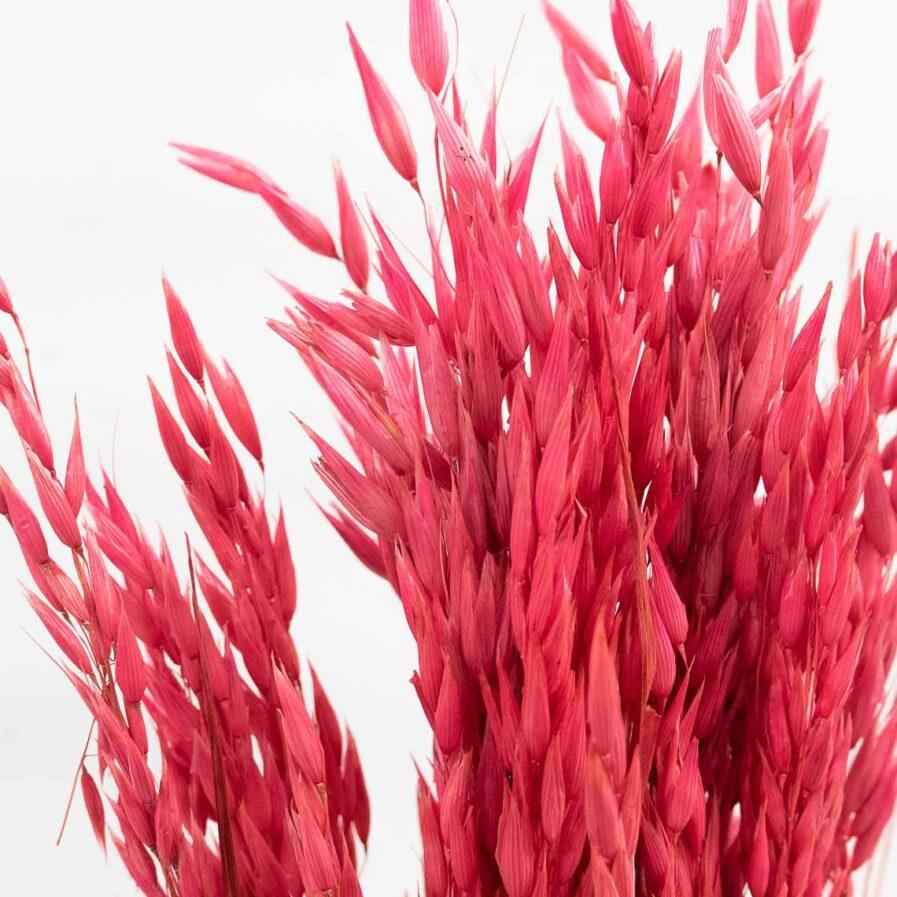 Trockenblume Avena Hafer pink