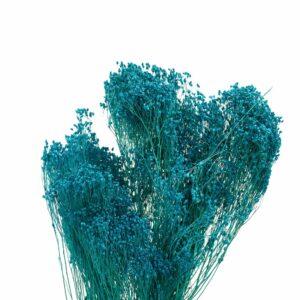 Trockenblume Broom Bloom blau
