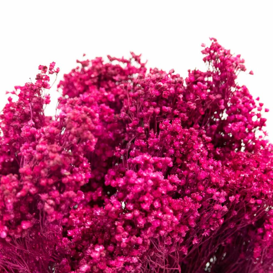 Trockenblume Broom Bloom fuchsia