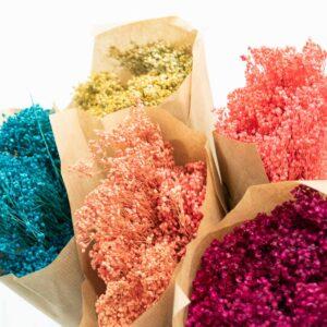 Trockenblume Broom Bloom mix