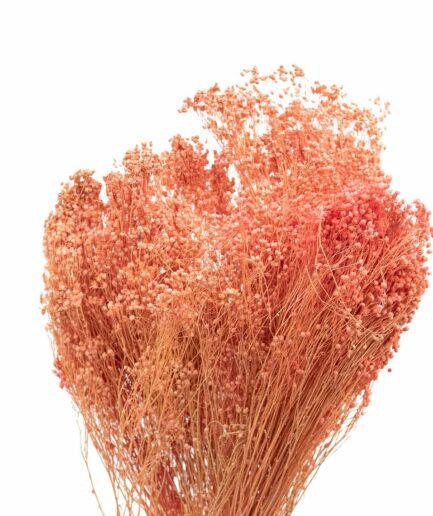 Trockenblume Broom Bloom pfirsich