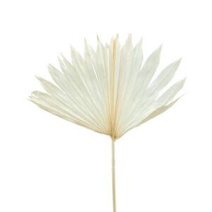 Trockenblume Palm suncut weiss