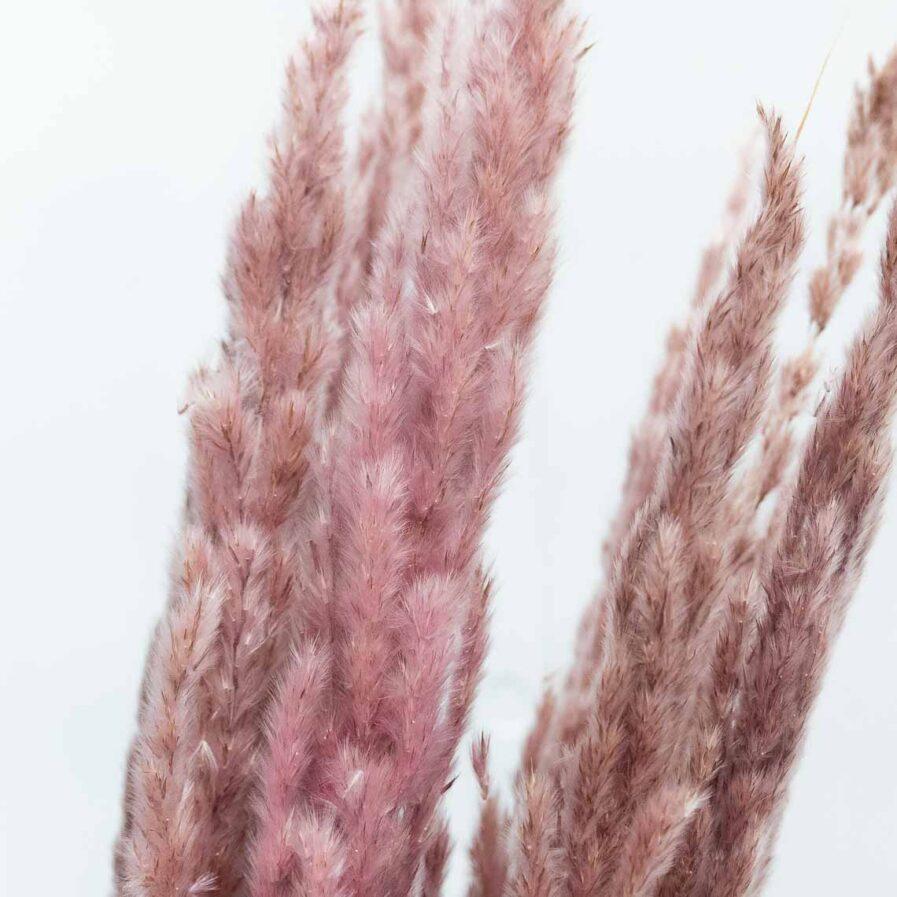 Trockenblume Pampasgras Erianthus pink