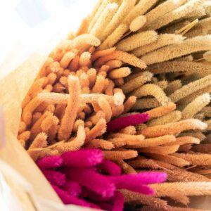 Trockenblume Phleum mix
