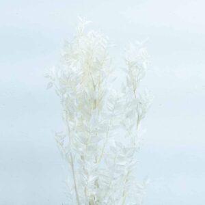 Trockenblume Ruscus weiss
