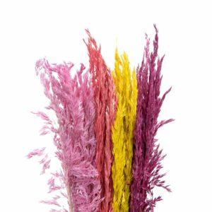 Trockenblume Salicchio mix