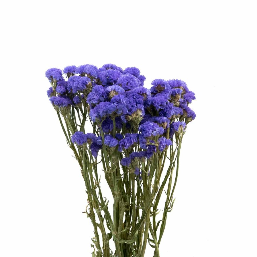 Trockenblume Statice blau