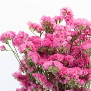 Trockenblume Statice pink