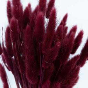 Trockenblume Lagurus bordeaux