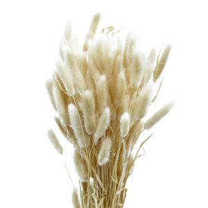 Trockenblume Lagurus beige