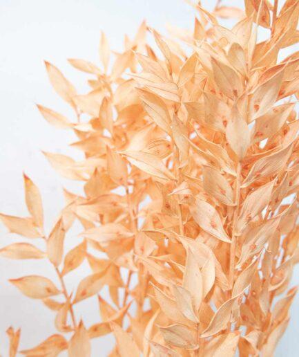 Trockenblume Ruscus orange