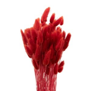 Trockenblume Lagurus rot