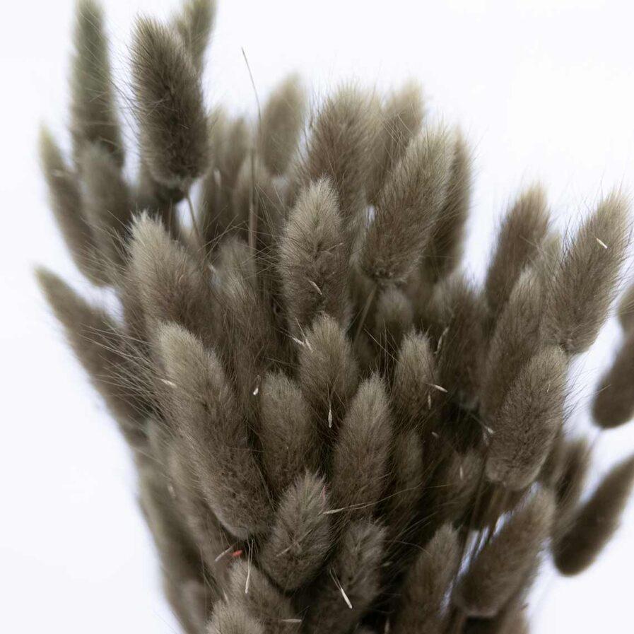 Trockenblume Lagurus moos-grün detail