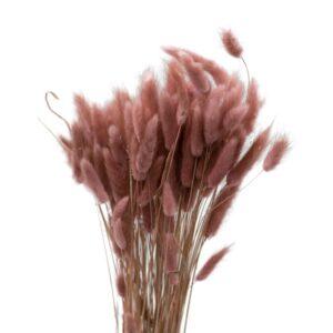 Trockenblume Lagurus altpink