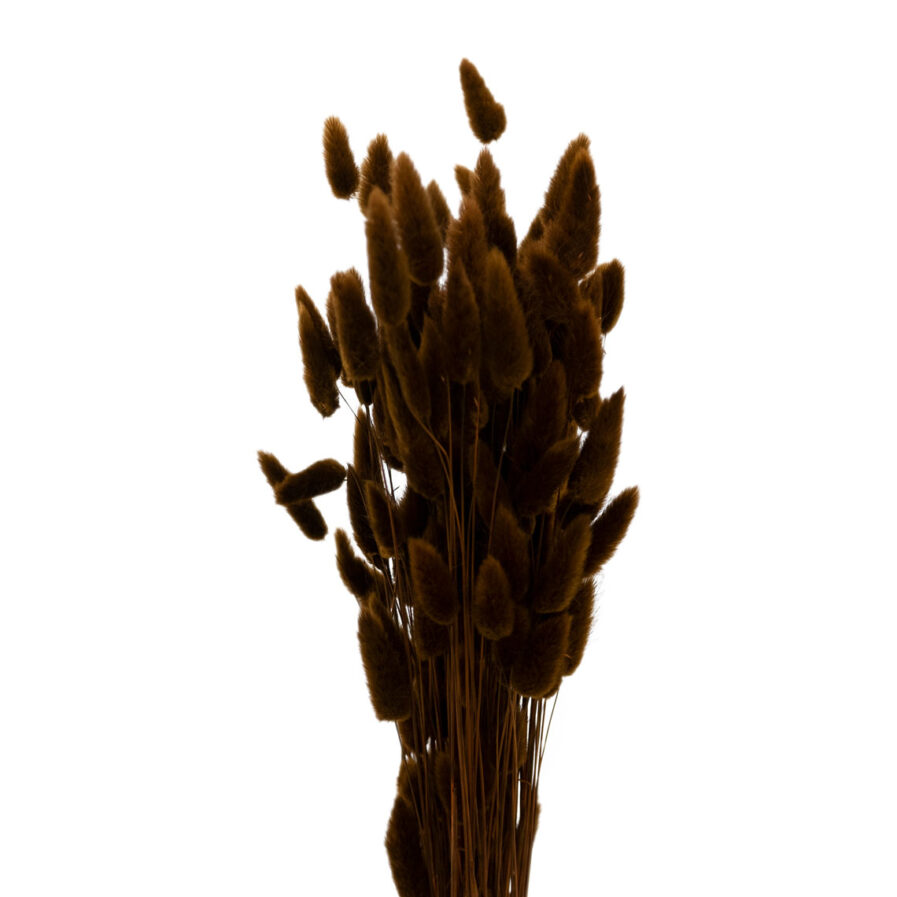 Trockenblume Lagurus braun