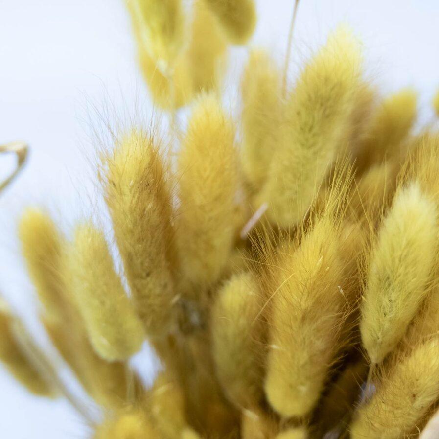 Trockenblume Lagurus altgelb detail