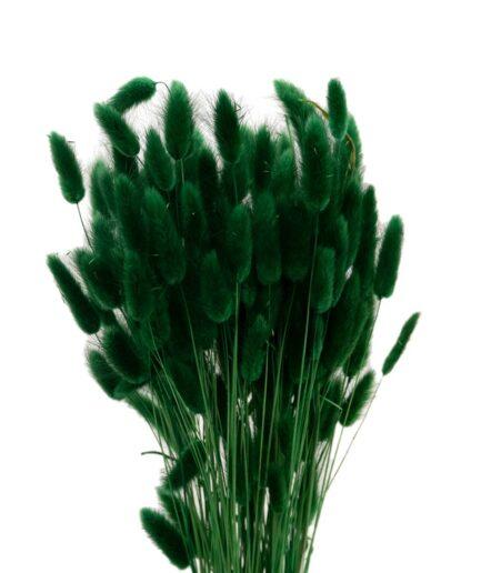 Trockenblume Lagurus grün