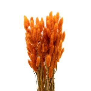 Trockenblume Lagurus orange