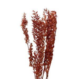 Trockenblume Ruscus braun