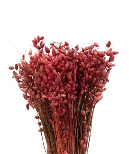 Trockenblume Briza maxima altrosa
