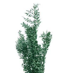 Trockenblume Ruscus grün