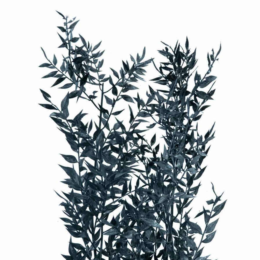 Trockenblume Ruscus schwarz