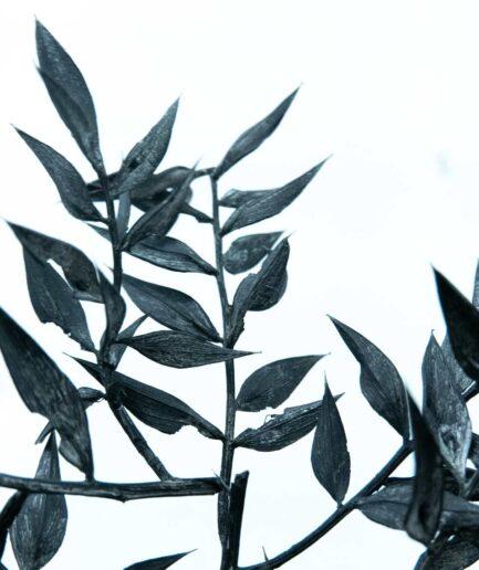 Trockenblume Ruscus schwarz detail