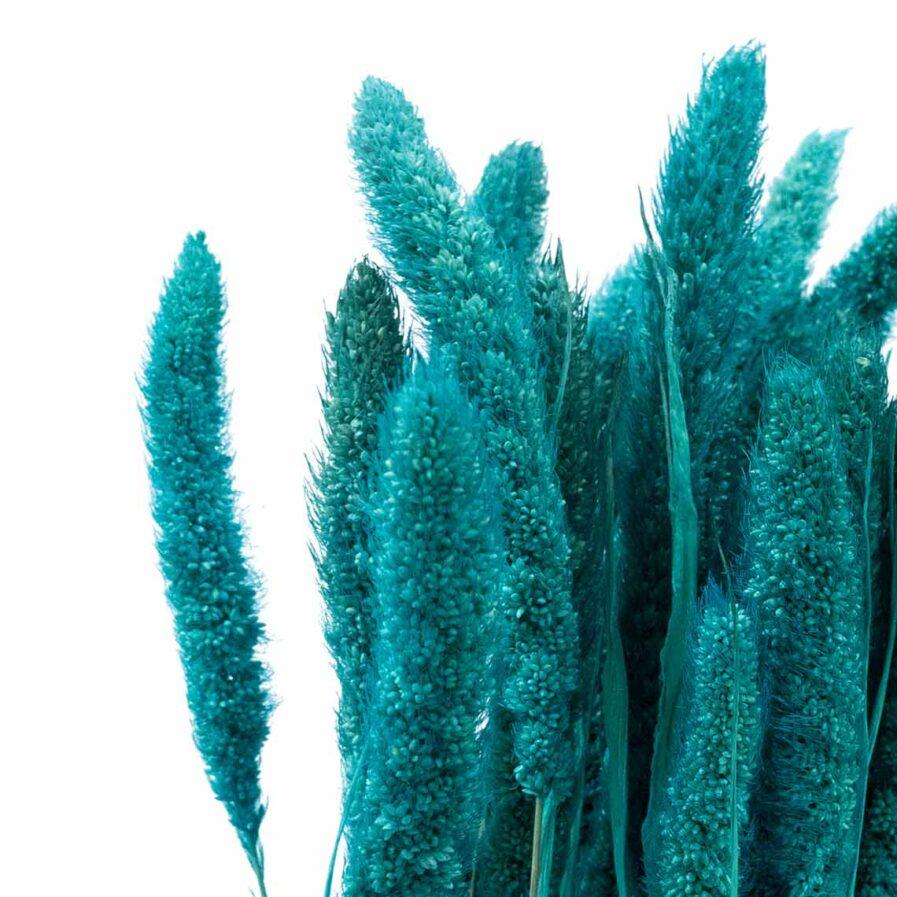 Trockenblume Setaria blau detail