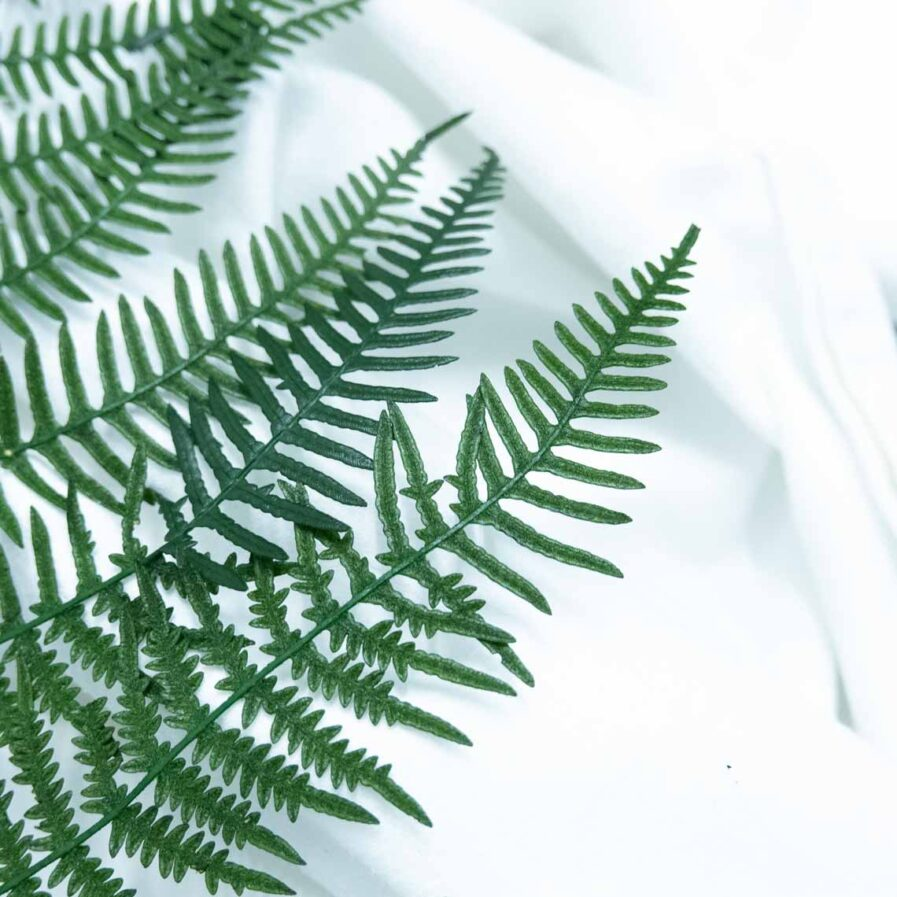 Trockenblume Fern grün detail