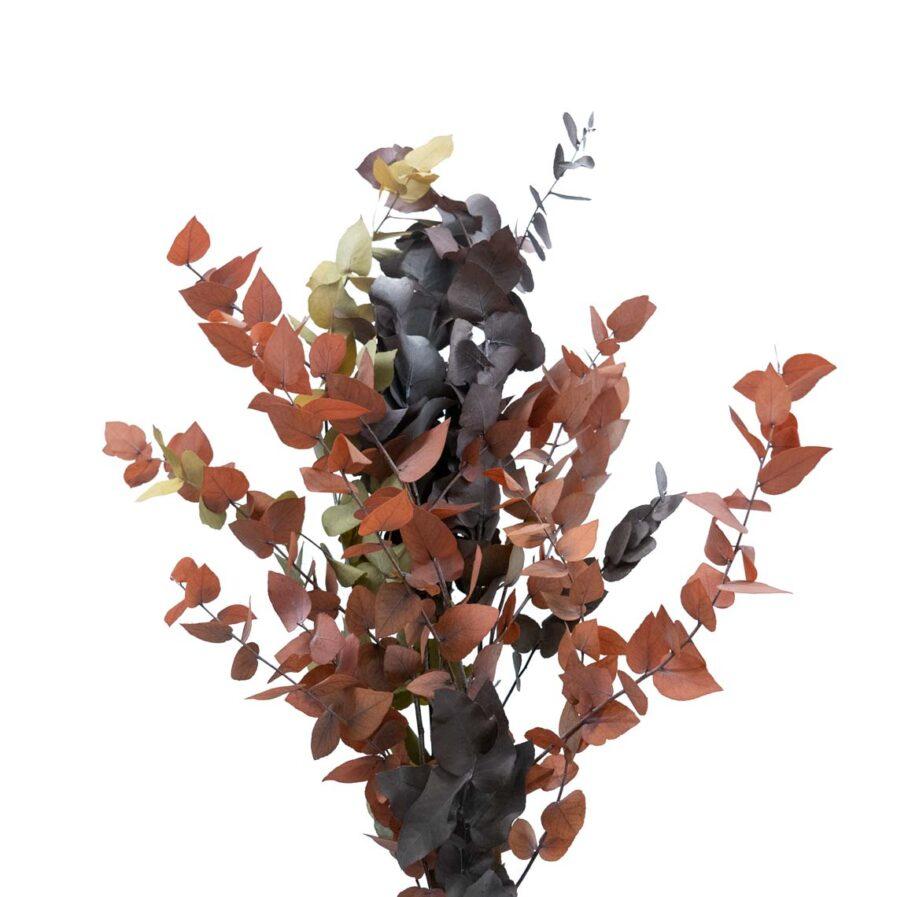 Trockenblume Eukalyptus Stuartiana