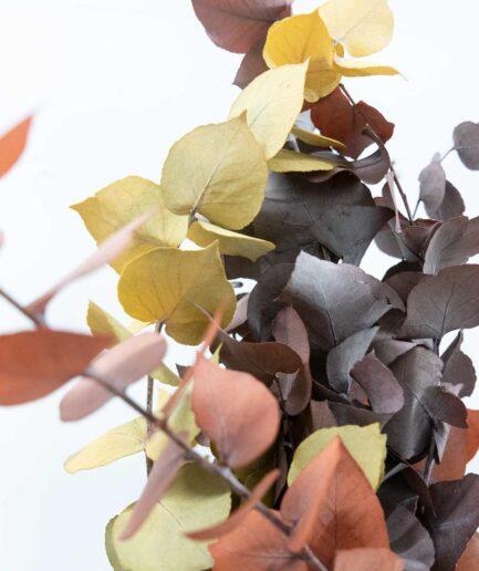 Trockenblume Eukalyptus Stuartiana detail