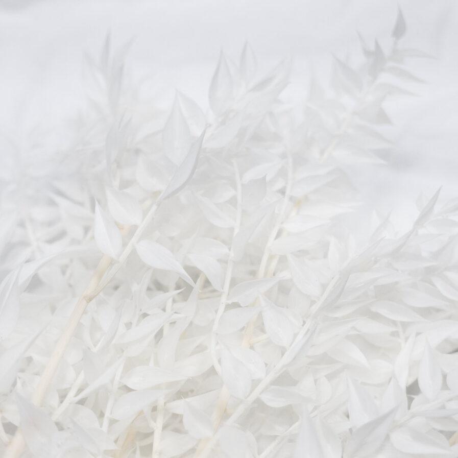 Trockenblume Ruscus weiss detail
